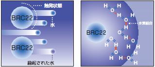 BRC22 触発状態 水素結合